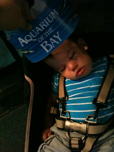 jc having hella fun at the aquarium