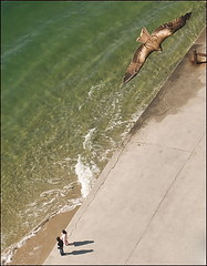 Un Matin à Hiroshima (Christian Lagat) Tags: ocean morning shadow sea mer bird japan children waves eagle hawk flight ombre hiroshima shore 日本 enfants vol vagues japon oiseau matin rive 広島 aigle rapace nikkor1855mmf3556 ワシ nikond90