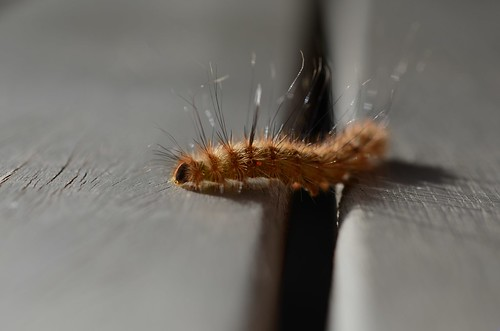 Curious little caterpillar