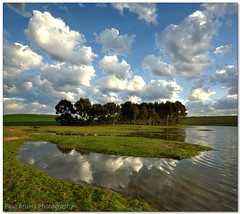 Clouds, Trees and Water (Panorama Paul) Tags: clouds reflections dam eucalyptus durbanville nohdr sigmalenses nikfilters vertorama wwwpaulbruinscoza paulbruinsphotography nikond3100