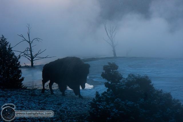 Yellowstone Day 2 52711 © Michael Klayman-006