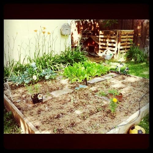 Garden 7.7.11