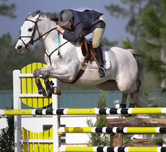 Gulf Coast Classic Exhibitor (carterse) Tags: horse animal sport action jumper horseshow athlete rider equestrian showjumping competitor stadiumjumping
