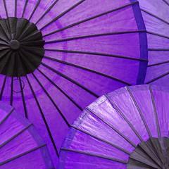Purple umbrellas (bag_lady) Tags: purple colourful umbrellas sunshades