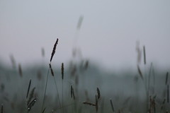(frettir) Tags: mist grass fog evening sweden stockholm meadow 2230 grs bromma ng kvll 1030pm ngby