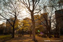 Hibiya Park / Tokyo, Japan (yameme) Tags: travel sunset nature japan canon eos tokyo     hibiyapark chiyoda  24105mmlis 5dmarkii 5d2