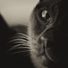 Second thoughts (Dirigentens) Tags: portrait bw monochrome closeup cat noiretblanc katt portrtt svartvitt fusse mygearandme mygearandmepremium mygearandmebronze mygearandmesilver rememberthatmomentlevel1 smcmacrotakumar6x7135mmf4 smcmacrotakumar6x7135mmf4nikon rememberthatmomentlevel2