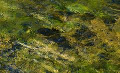 _DSC8200 (DianeBerky19) Tags: nikondf wy jacksonholewyoming yellowstonenationalpark water river