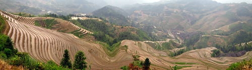 Jinkeng Rice Terraces Panorama