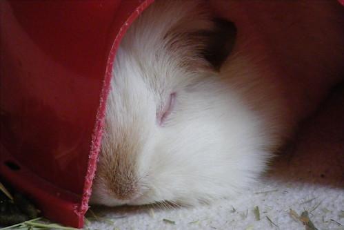 Cupcake, sleeping