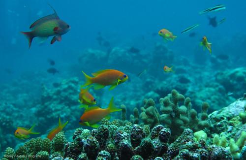 Malediven 2010 -0752