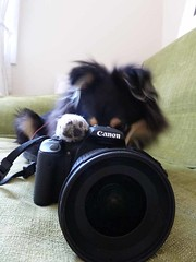 "Cameradog • <a style=""font-size:0.8em;"" href=""http://www.flickr.com/photos/55880040@N05/5894390874/"" target=""_blank"">View on Flickr</a>"