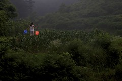 Early Riser (Dai Luo) Tags: life china green rural corn colorful rice working fields worker hunan