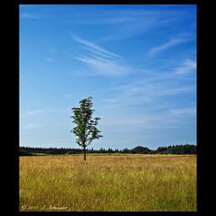 Der Baum - The Tree [explored] (Sebastian.Schneider) Tags: trees sky tree nature germany landscape deutschland scenery hessen outdoor country natur himmel scene explore telephoto land tele landschaft bäume baum mittelgebirge ldk explored haiger entdecken drausen lahndillkreis lahndill