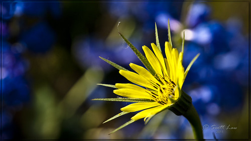 Yellow Wildflower by Just Used Pixels