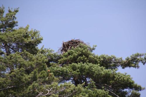 ハヤブサの巣
