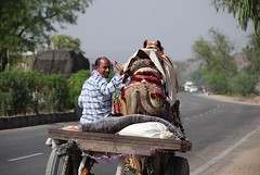Rajasthani Camel Driver (Let Ideas Compete) Tags: road india man wagon highway colorful indian camel transportation hauling friendly cart waving jaipur rajasthan decorated rajasthani indianculture
