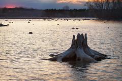 Sunset watcher (spaceamoeba) Tags: sunset ontario canada waterloo stump 7d 1020 laurelcreek