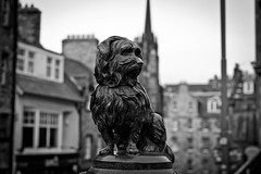 IMG_1498 (TheChimpofdoom) Tags: blackandwhite bw dog statue 50mm scotland edinburgh bobby lothians greyfriarsbobby touristhighlight