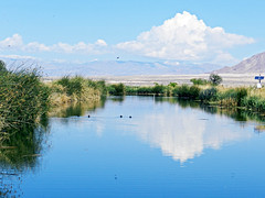 Take a Moment to Reflect (TheJudge310) Tags: blue sky usa cloud lake reflection bird water landscape pond day unitedstates cloudy nevada nv april henderson preserve 2012 partly nikoncoolpixp500