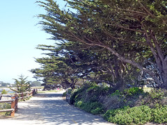Pacific Grove 5-7-12 (17) (Photo Nut 2011) Tags: pacificgrove california monterey berwickpark