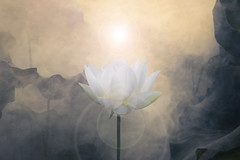 White Lotus Flower Surreal series - DD0A7188-2-1000 (Bahman Farzad) Tags: flower yoga peace relaxing peaceful meditation therapy