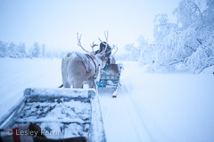 0045 (lesley v) Tags: holiday snow ice finland reindeer husky sweden arctic aurora northernlights january2013 davviarcticlodge