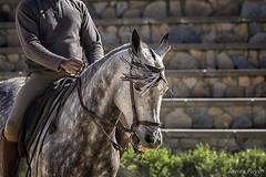 Jinete (javmap) Tags: caballo jinete cuenca