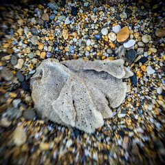 Seaside Dreaming (Michael Rawle) Tags: beach ocean sponge coastal things seascape lensbaby places stones coffsharbour newsouthwales australia au