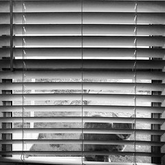 Time to come in (jay.dearing) Tags: shapes blinds cat blackandwhite