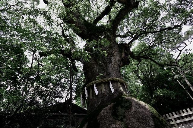 Tree Deity