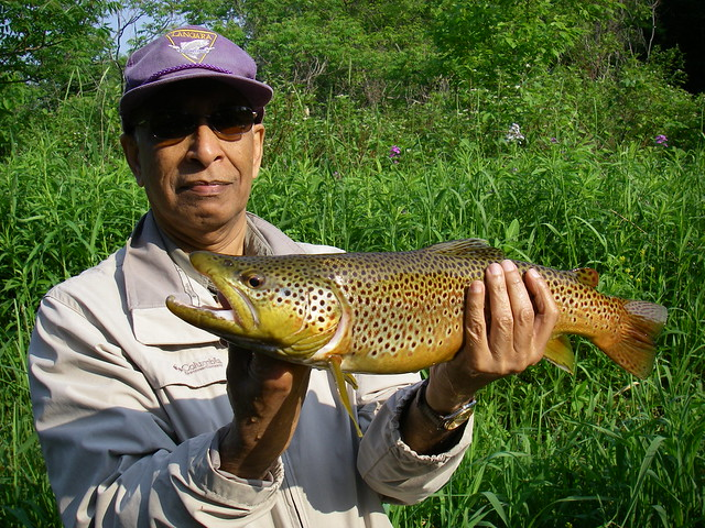 Abe's Big Brown Trout