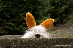 Happy Easter ! (dewollewei) Tags: easter bobtail oes pasen oldenglishsheepdog paashaas bunnu
