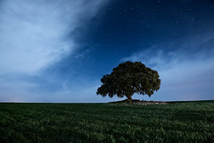 101 Estrellas (raul_lg) Tags: longexposure light sky tree luz night clouds canon stars arbol noche cielo nubes estrellas nocturna albacete castillalamancha encina mark3 llanura largaexposicion raullopez canon1635 canon5dmarkiii raullg