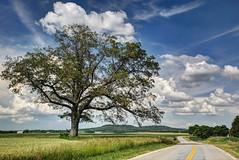 Spring Oak (Barry Freas) Tags: road tree clouds spring oak farm kentucky farmland winding pilotknob