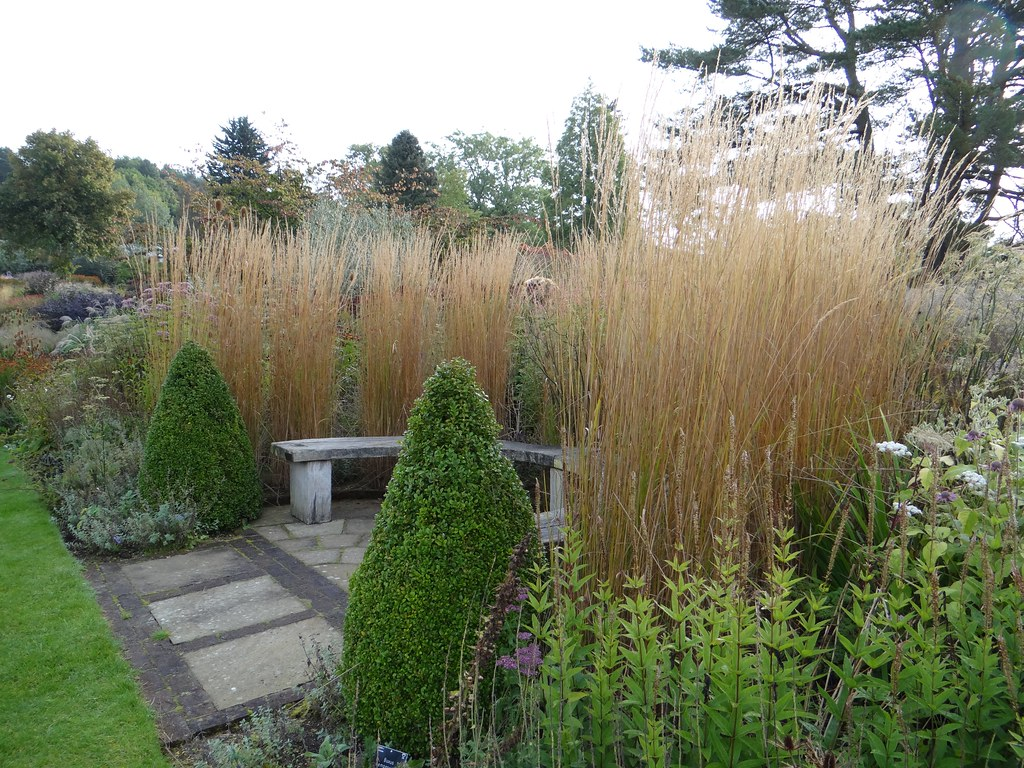the world 39 s most recently posted photos of calamagrostis. Black Bedroom Furniture Sets. Home Design Ideas