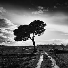 The Way & The Tree (DavidFrutos) Tags: bw seascape monochrome field clouds landscape monocromo paisaje bn murcia filter lee nubes nd campo filters canondslr filtro filtros gnd neutraldensity canon1740mm flickraward densidadneutra davidfrutos 5dmarkii niksilverefexpro redmatrix theacademytreealley flickraward5 singhraygalenrowellnd3ss flickrawardgallery cagitndemula