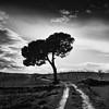 The Way & The Tree (DavidFrutos) Tags: bw seascape monochrome field clouds landscape monocromo paisaje bn murcia filter lee nubes nd campo filters canondslr filtro filtros gnd neutraldensity canon1740mm flickraward densidadneutra davidfrutos 5dmarkii niksilverefexpro redmatrix theacademytreealley flickraward5 singhraygalenrowellnd3ss flickrawardgallery cagitándemula