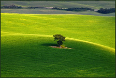 ...there is a green hill far away... I'm going back there one fine day... (zio paperino) Tags: shadow italy tree green nature grass yellow nikon italia hill ombra unesco erba tuscany siena valdorcia albero d90 quirico ziopaperino mygearandme mygearandmepremium mygearandmebronze mygearandmesilver mygearandmegold mygearandmeplatinum flickrstruereflection1