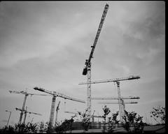 cranes (brian_mcqueen) Tags: 120 film mediumformat kodak tmax rangefinder 100 6x7 plaubel makina w67