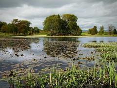 SPRING LOCHAN (kenny barker) Tags: trees nature scotland spring waterlilies lochan landscaoe larbert kennybarker