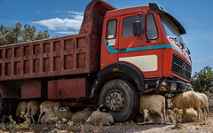 """Aufgebockter"" LKW (searching for some shadow) (bernd obervossbeck) Tags: shadow truck sheep kreta greece crete heat kipper oldtimer shelter griechenland schafe lkw schaf hitze schutz"