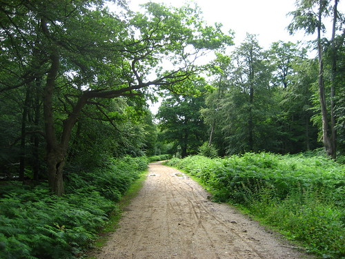 Epping Forest, lush in the summer