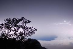 June 22 - Leftovers #1 (sitzmansitzman) Tags: costa storm tree beautiful june night clouds 22 flash rica bolts 23 lightning 365 rayo blitz gewitter sturm 2011 ridethelightning 3652 sitzblogblogspotcom