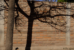 Todos tenemos nuestra sombra (Flor Gojman) Tags: street shadow tree argentina wall arbol pared calle nikon bricks sombra cordoba ladrillos 2011 d90 capilladelmonte nikond90