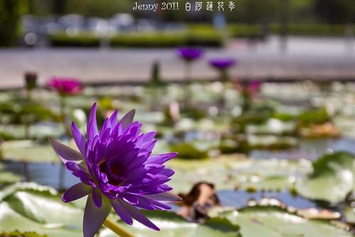 20110620白河蓮花季-5807