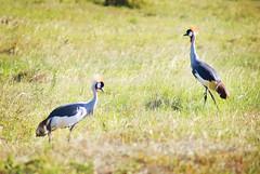 "PhotoFly Travel Club Kenya Safari 2011! • <a style=""font-size:0.8em;"" href=""http://www.flickr.com/photos/56154910@N05/5892439153/"" target=""_blank"">View on Flickr</a>"
