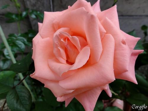 blog-110702-JARDIN-Cherish1