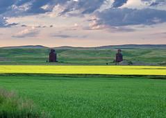 SKSW11g4D Neidpath Twin Grain Elevators, Saskatchewan (CanadaGood) Tags: coulee prairie agriculture farm grainelevator 2011 colour color blue green yellow afternoon neidpath building sk saskatchewan canadagood canada best favourite thisdecade