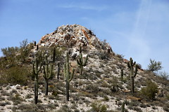 (ONE/MILLION) Tags: flowers arizona cactus plants love nature outdoors photo google interesting rocks colorful flickr image photos blossoms mother images blooms saguaro find daytrip onemillion williestark larajeff